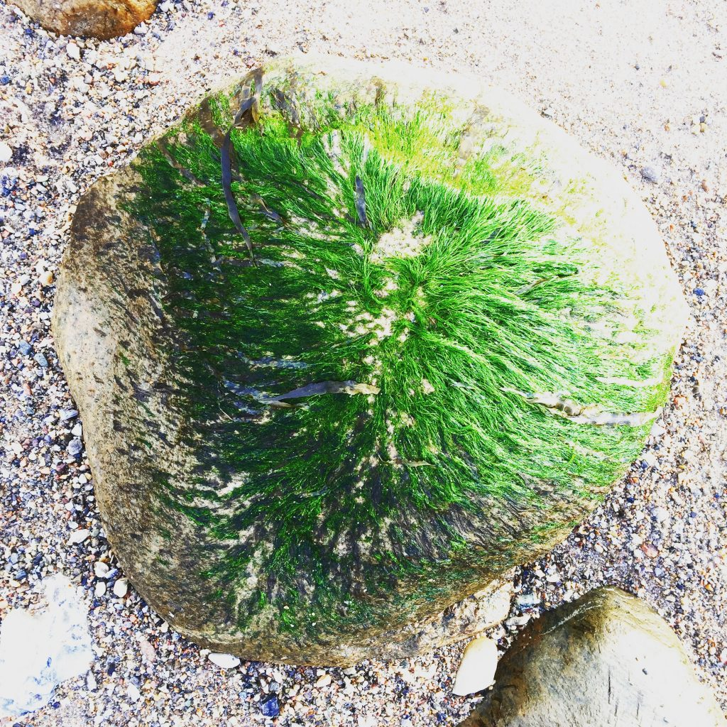 Rock with seaweed hair