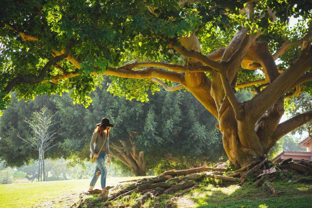 Rooting yourself like trees