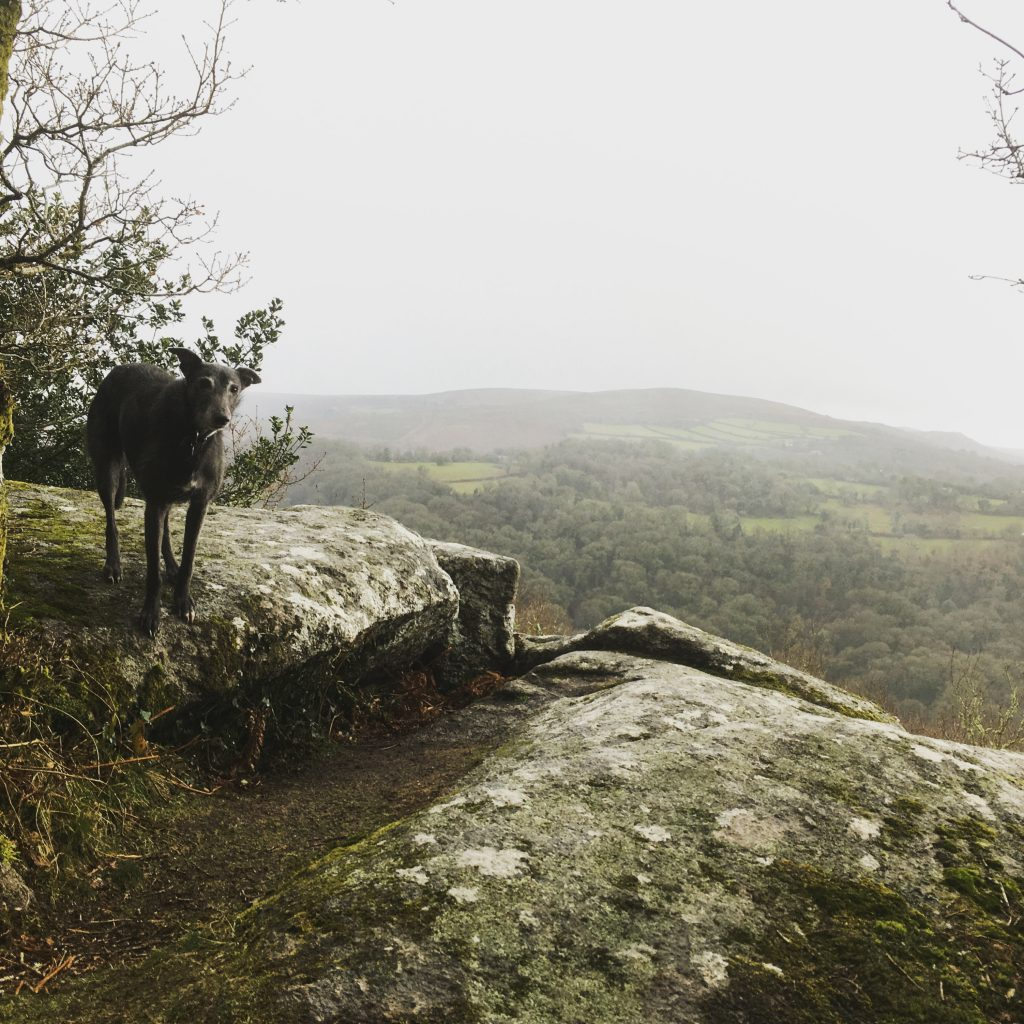 Image of lurcher overlooking misty valley