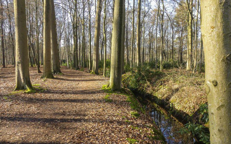 Wandeling doorheen Lippelobos (5,5 km) - Effen Weg vzw