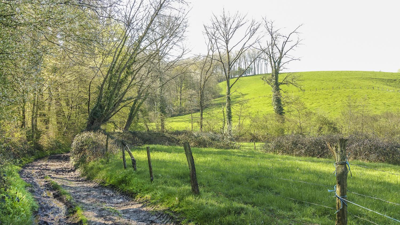 Wandeling doorheen het Burreken (8 km) - Effen Weg vzw