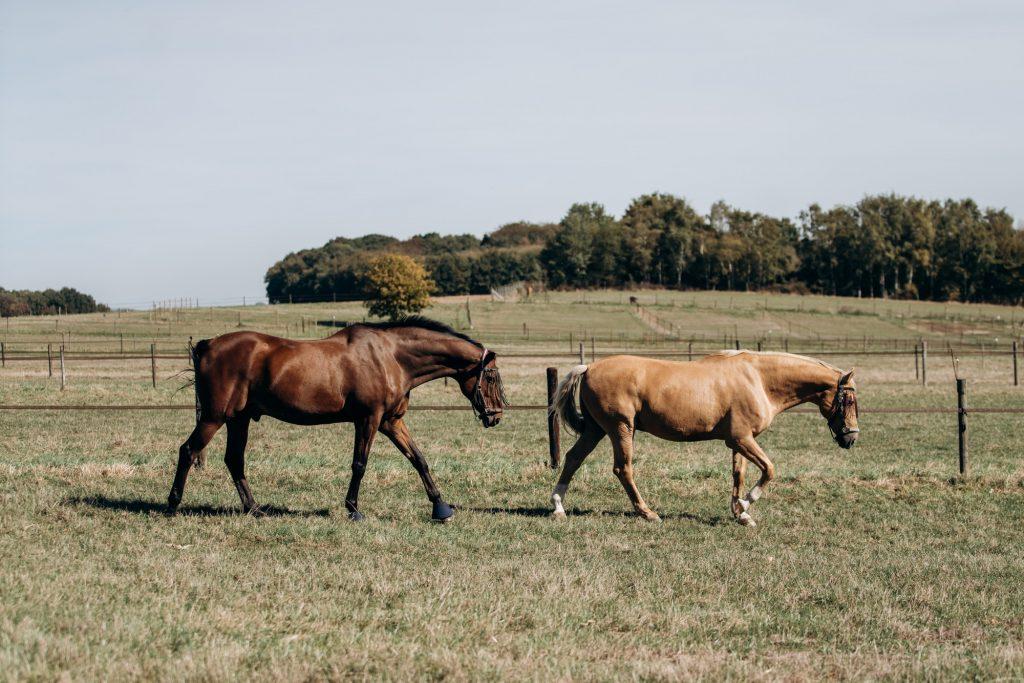 Horse farm. Horses on a horse farm. Horses graze on a horse farm.
