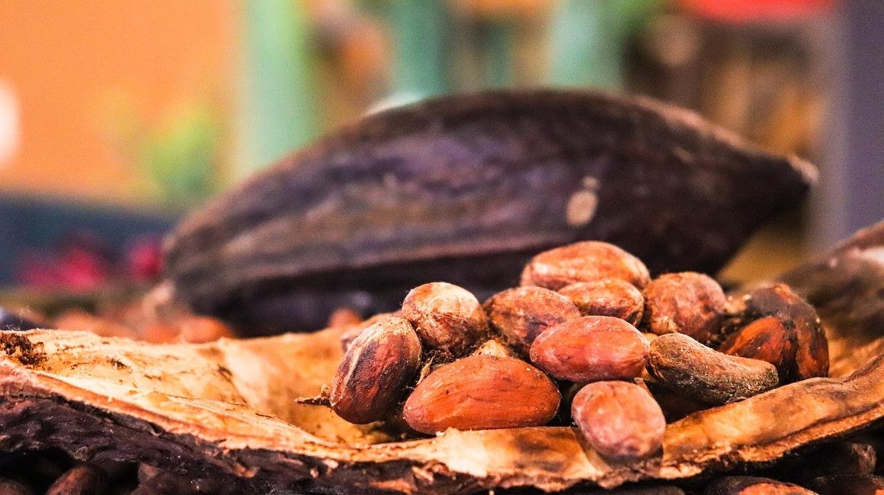 Kakao Frucht mit Kakao Bohnen