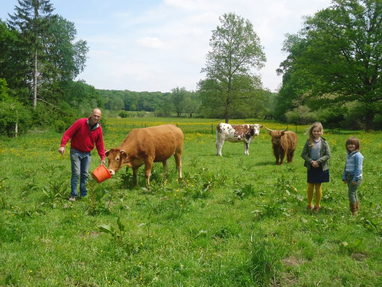 Une balade à la découverte des veaux et vaches de l'Elevage