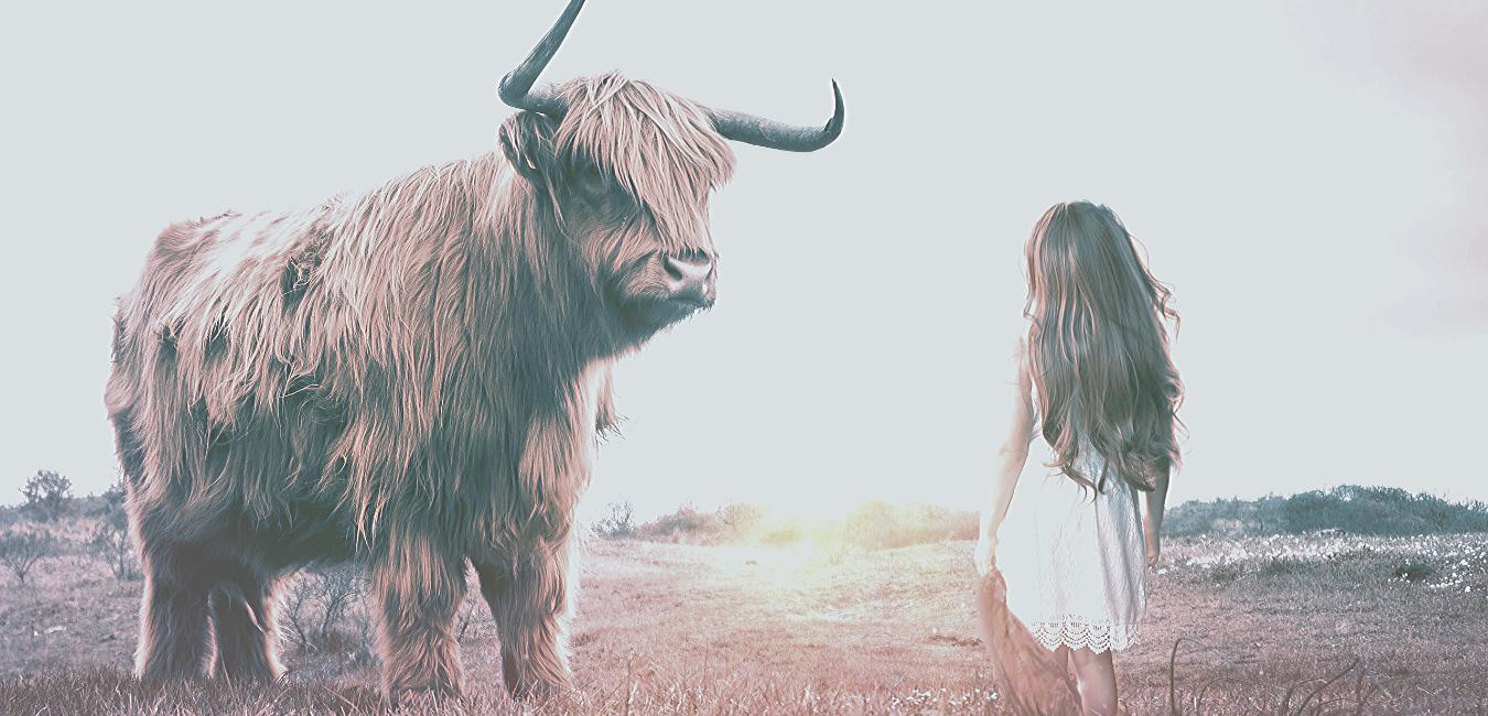 En ko och en flicka står vända mot varandra.