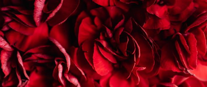 rose rosse nel linguaggio dei fiori