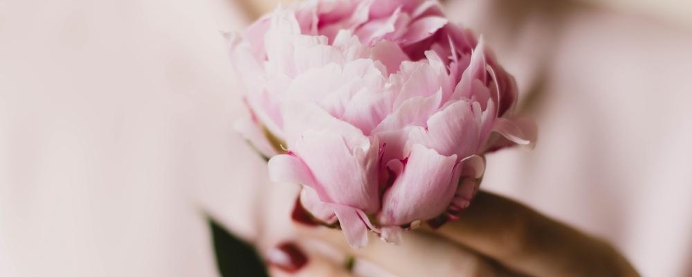 galateo dell'ospite fiore copertina