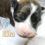 Eila_02, Tag 6