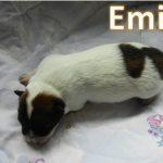 Emil_01, Tag 6