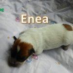 Enea_01, Tag 6
