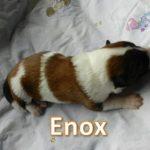 Enox_01, Tag 6