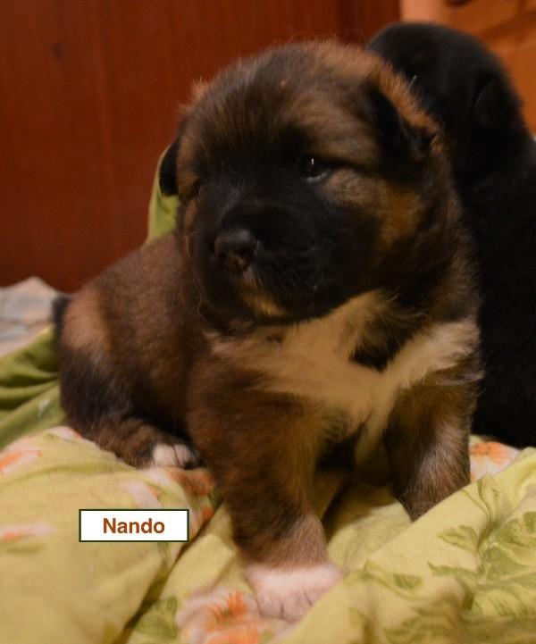 Nando-5