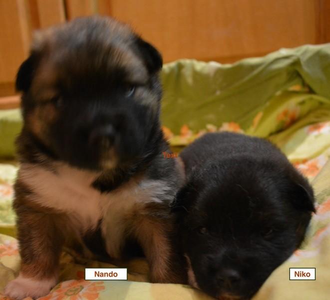 Nando und Niko ( rechts)