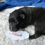 Nash, 8 Tage alt