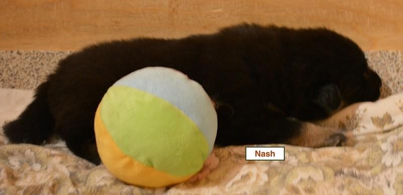 Nash-5