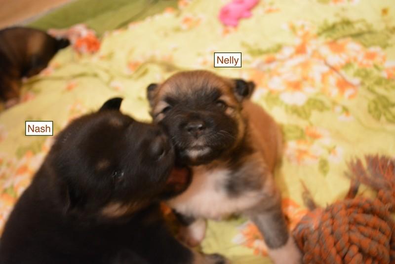 Nash und Nelly