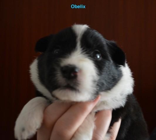 Obelix 3