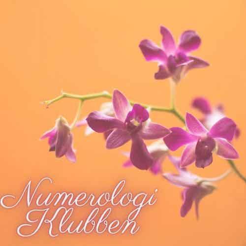 Online Numerologi Undervisning