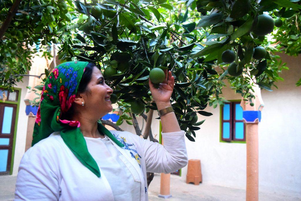 EBM - woman reaching to fruit on tree