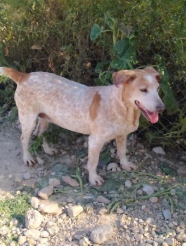 samba-fadderhund-gpar-5