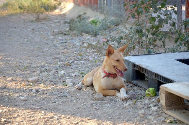 sid-fadderhund-gpar-1