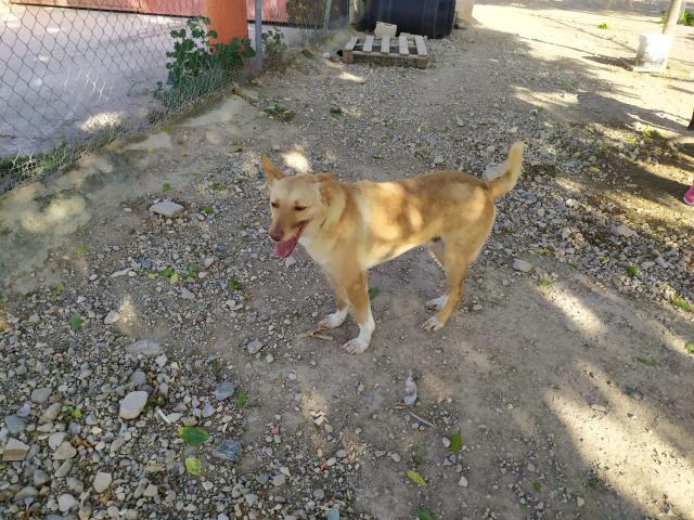 sid-fadderhund-gpar-5