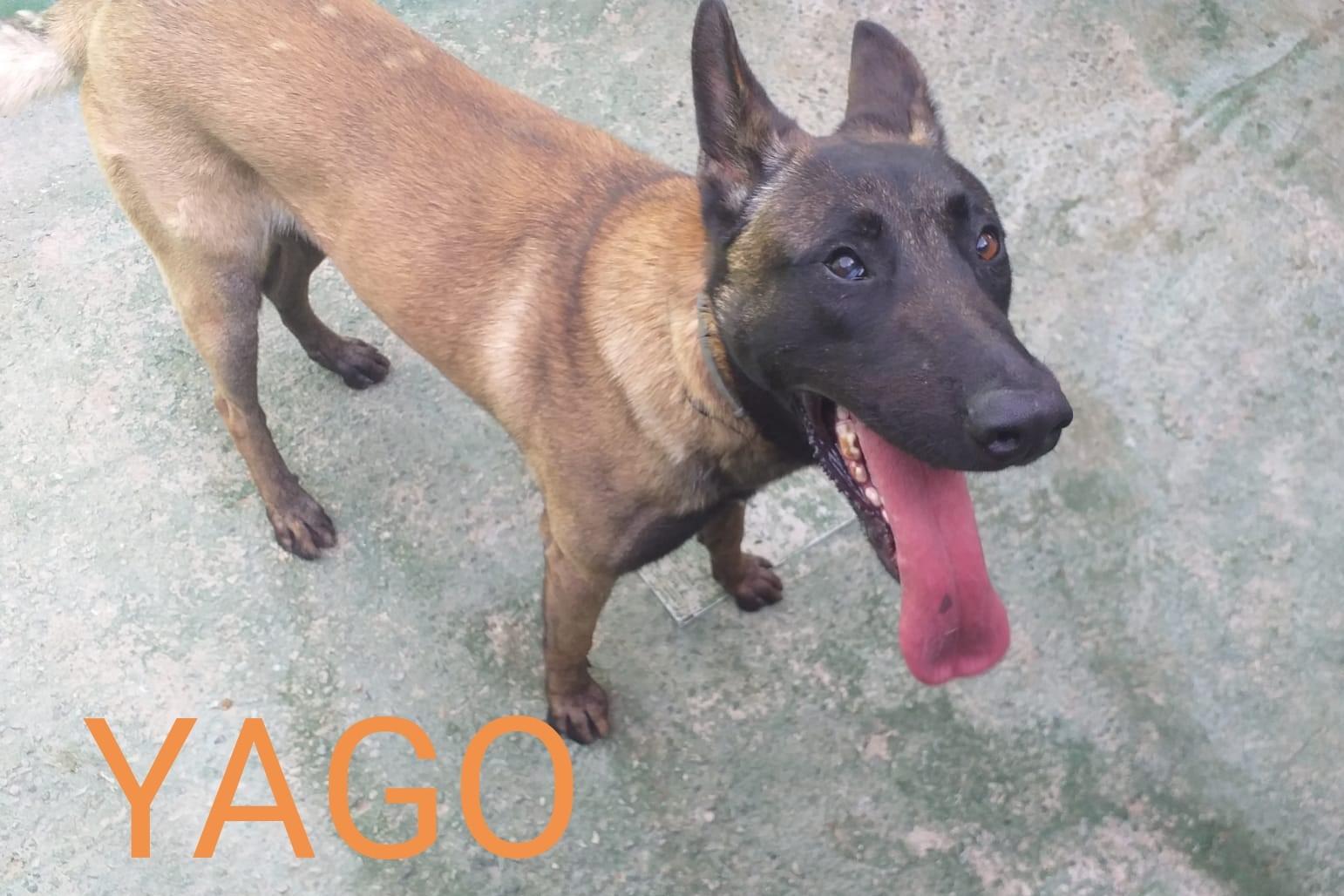 Yago (8)