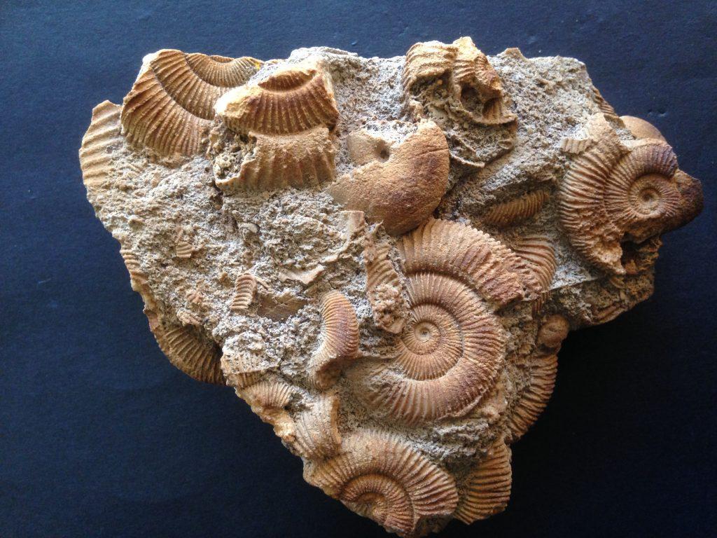 Fossiel slakkengroep