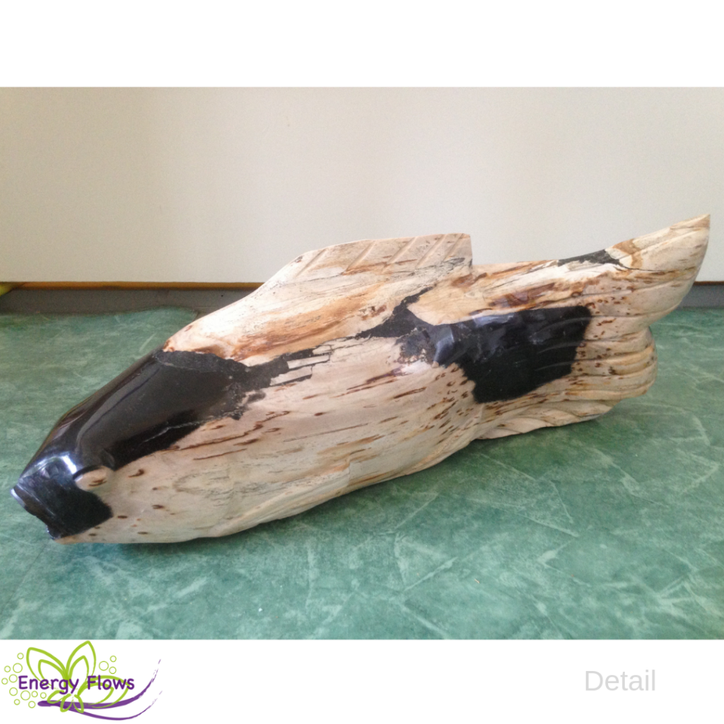 afb Versteend hout koi karper 6,8 kg