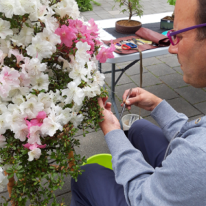 Energy Flows bonsai Javie met azalea