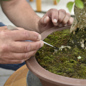 Energy Flows bonsai onkruid verwijderen