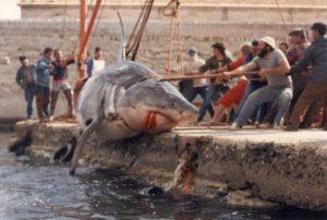 c8b6cb890a-tv-e-soap-dicembre-di-sangue-dmax-squalo-bianco-favignana-1987