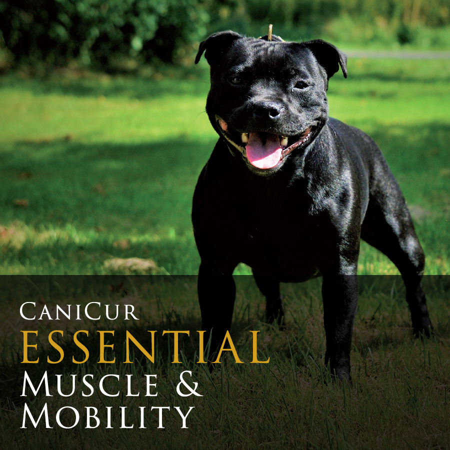 Essential Muscle & Mobility (0.5kg)