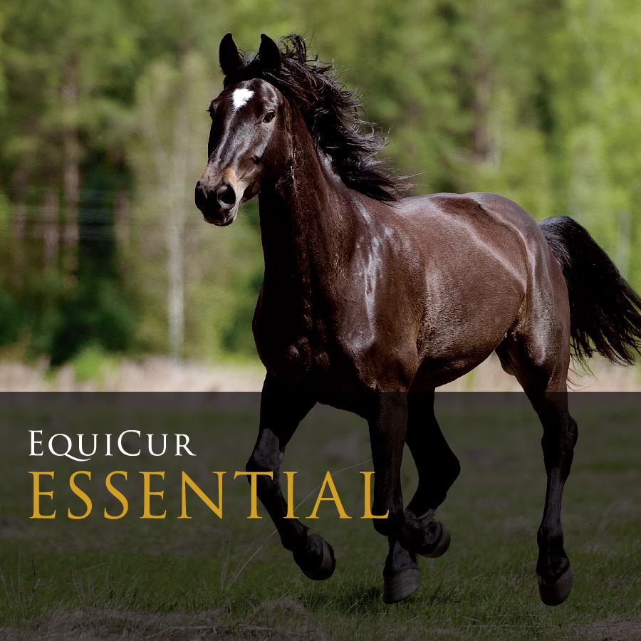 Essential (25kg)