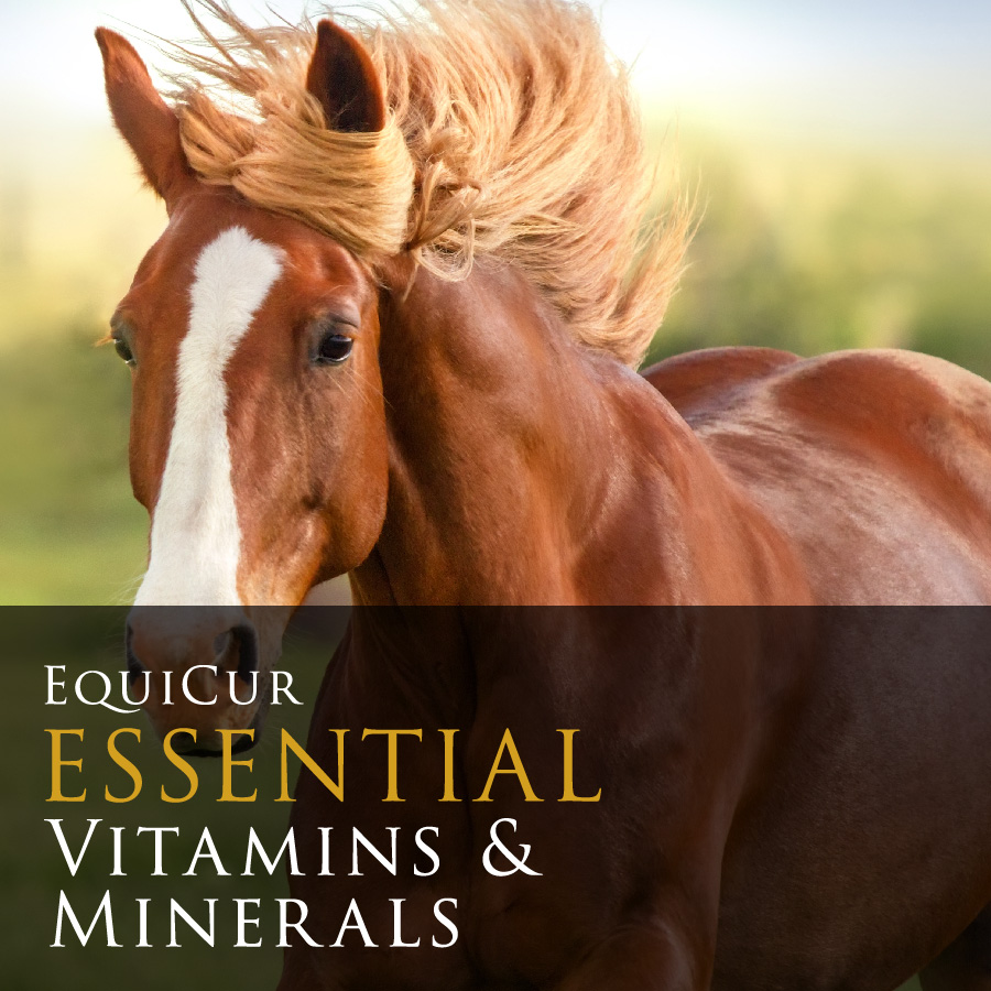 Essential Vitamins & Minerals (4kg)