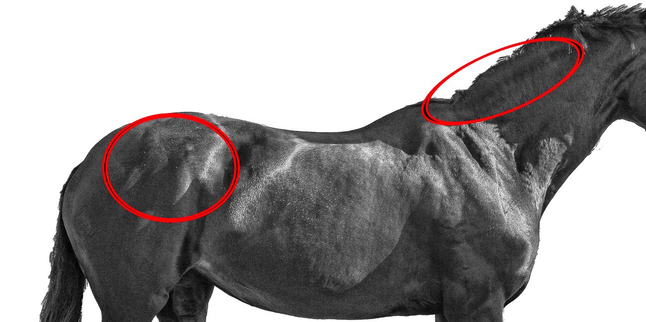 Välfärdssjukdom Kan Drabba Din Häst