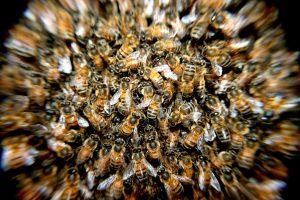 5 einfache Wege zu deinem ersten Bienenvolk