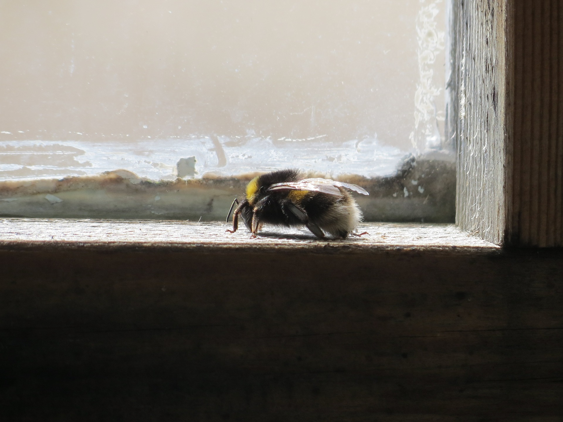 Pestizide stören natürlichen Hummelflug