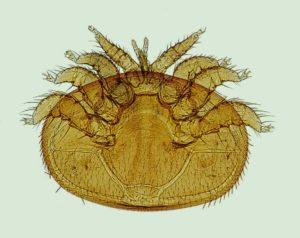 Varroabehandlung im Sommer: Eine Übersicht!