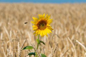 Nachhaltigkeit als Imker: Nur mal eben schnell die Welt retten! (Teil1)
