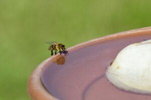 Nutze eine einfache Bienentränke, damit die Klimaanlage im Bienenstock nicht ins Stocken gerät