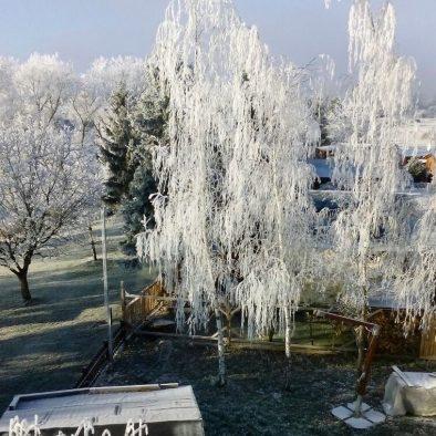 Bild-Winter