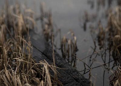 04-fotokunst-forkullet-trae-i-vandhul-ersted.photo galleri