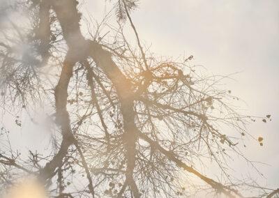 09-fotokunst-mirrortonature-naturbillede-spejlning-annaoverholdt