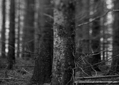 13-fotokunst-trae-plantage-ersted.photo