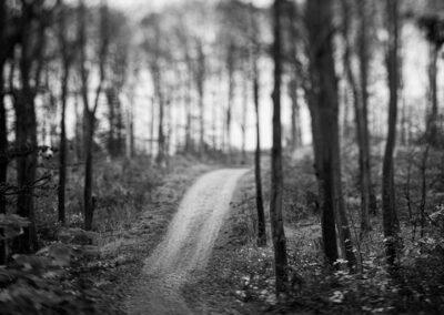 17-fotokunst-skov-vej-ersted.photo