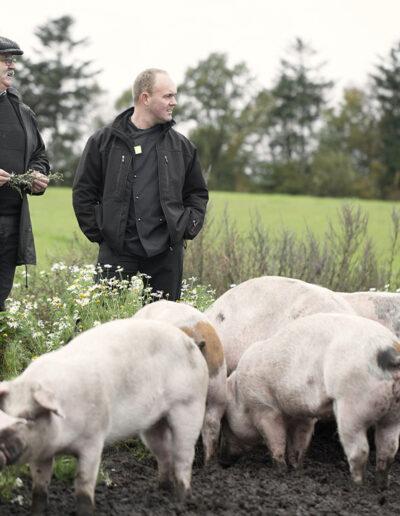 20-grise-landmand-sallingsuper-reportage-erstedphoto