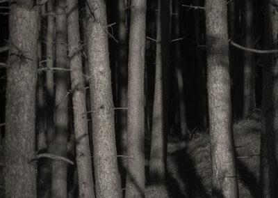 skov-natur-kunstfotografering-kunstfoto-ersted.photo
