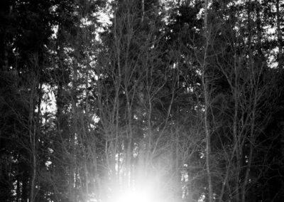 26-solen-skinner-igennem-traeer-ersted