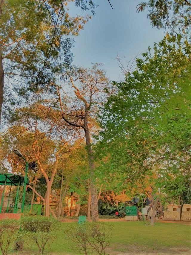 Buy and Hold für Anleger mit ETFs in Zeiten der Corona? Eine Schönwetterstrategie? Bild zeigt einen Park in Neu Delhi, Indien.